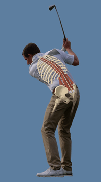 diagram of lower back during golf swing
